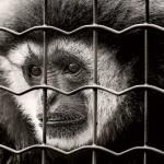 monkey-2316199_1920